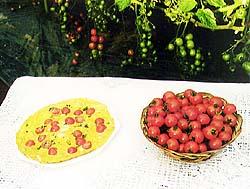 ミニトマトのオープンオムレツ